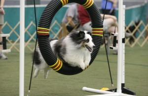 CAROLINA PIEDMONT DOG AGILITY