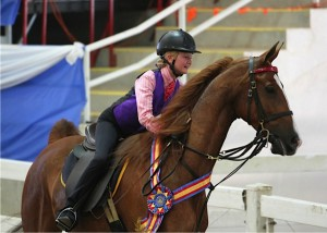 American Saddlebred of the Carolinas WINTER TOURNAMENT